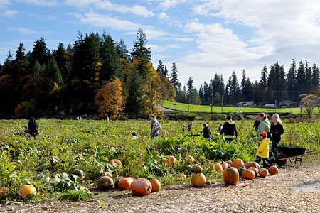 Find the perfect pumpkin and have a great fall day at Bob's Corn Maze and Pumpkin Patch in Snohomish, Washington, northeast of Seattle.